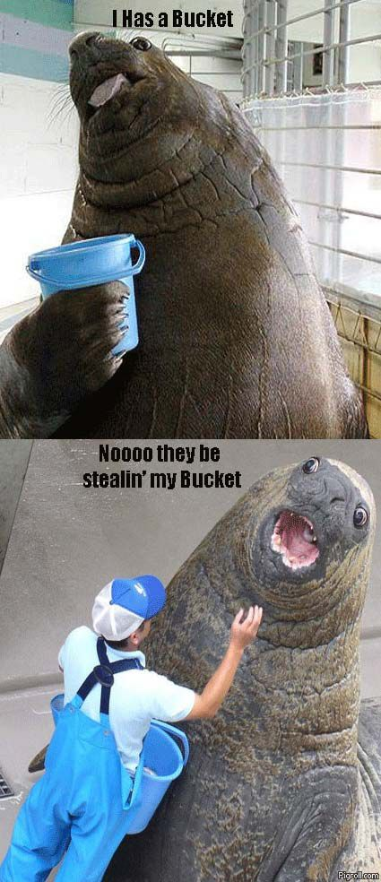 Walrus has a bucket