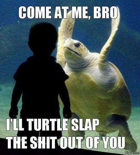 Come at me turtle