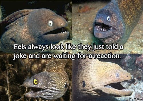Eels always look like they just told a joke