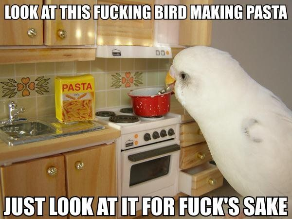 Look at this fucking bird making pasta