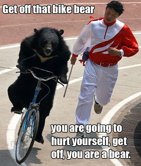 Get off that bike bear