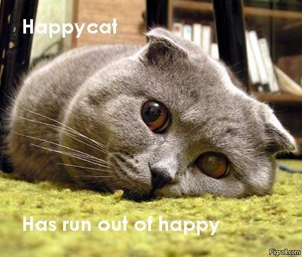 Happycat has run out of happy