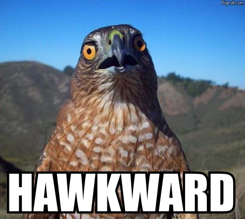 Hawkward hawk