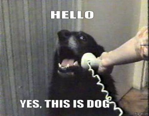 Dog talking on the phone
