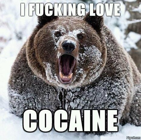 Bear fucking loves cocaine