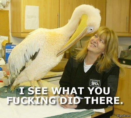 Pelican sees what she did there