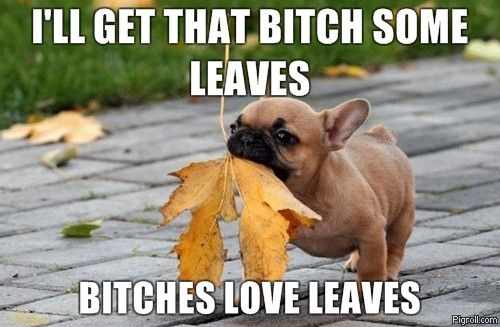 I'll get that bitch some leaves