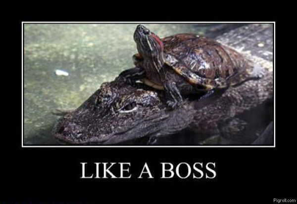 Turtle riding a crocodile like a boss