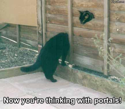 A cat going through the portal
