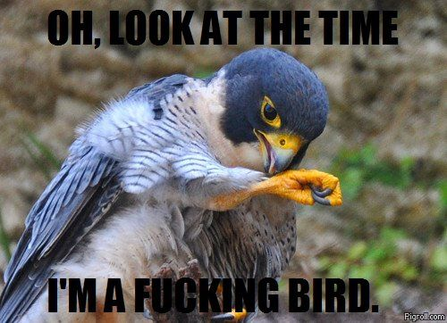 Oh, look at the time, I'm a fucking bird