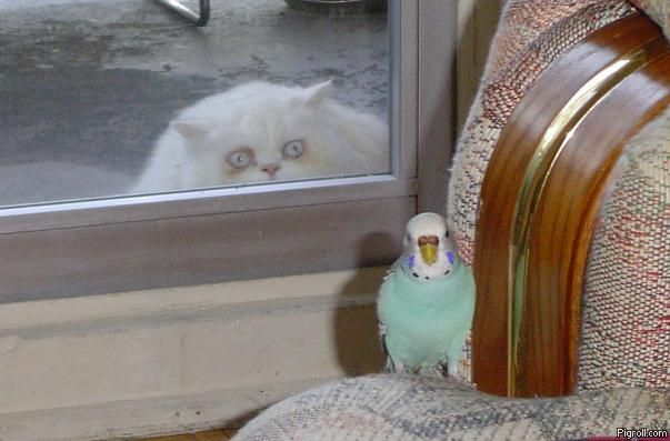 A cat, a parrot and a window