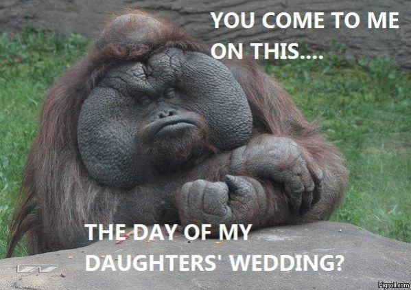 Godfather orangutan