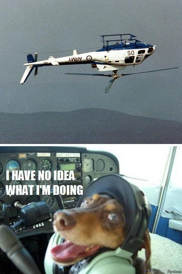 A dog piloting a helicopter