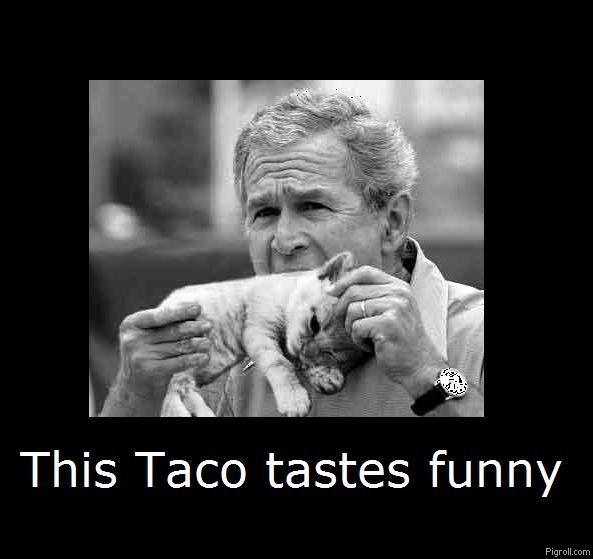 Bush enjoying a taco cat